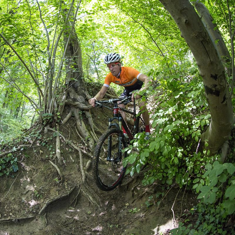 Mountainbiker In Bos Windraak