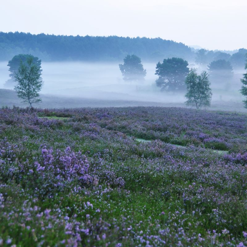 Mist over de Brunsummerheide