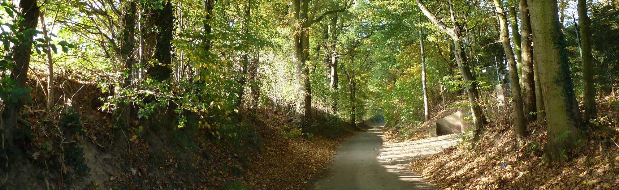 Schinveld-Schinveldse bossen