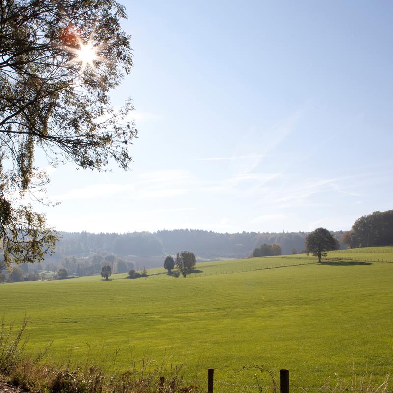 Landal  Hoog Vaals - Foto 3
