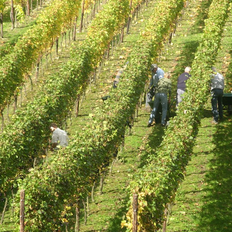 Wijngoed Fromberg - Foto 0