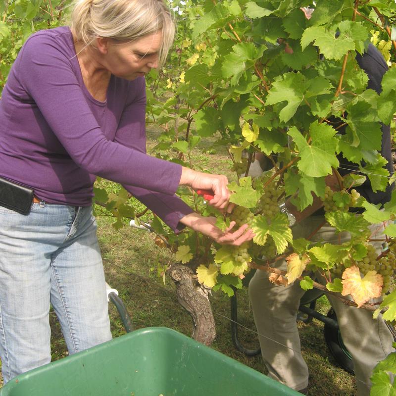 Wijngoed Fromberg - Foto 1