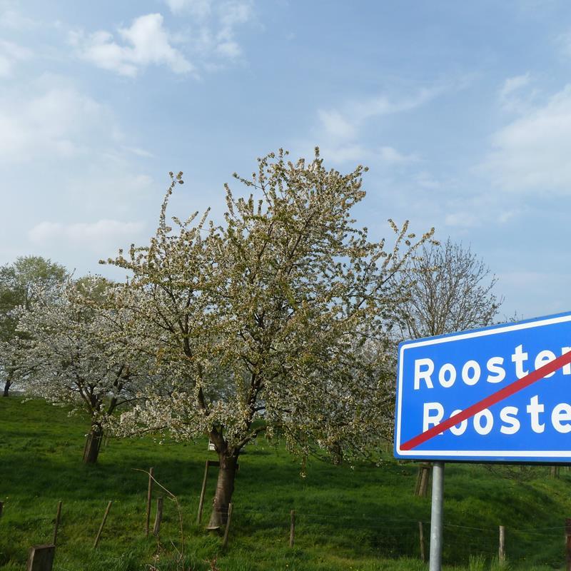 Ommetje Maasdal Roosteren ES04 - Foto 1