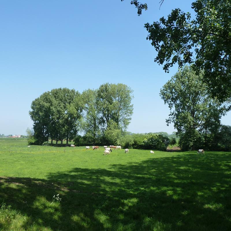 Ommetje Maasdal Roosteren ES04 - Foto 3