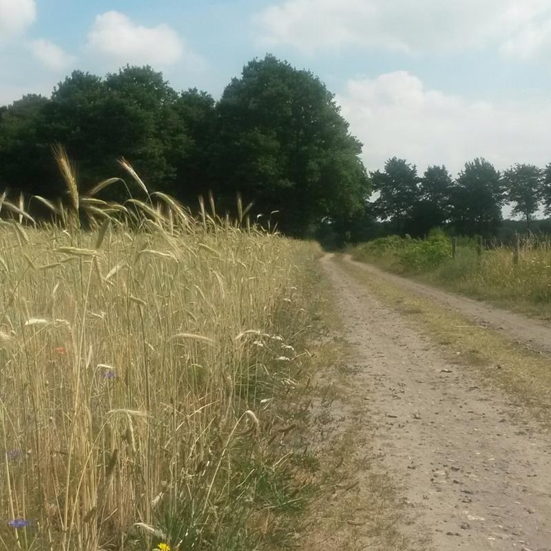 Echt MTB-route - Foto 1