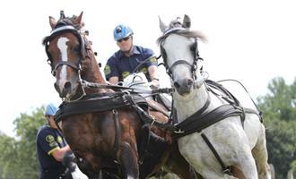 NK enkel- en tweespan paarden 2 t/m 4 augustus