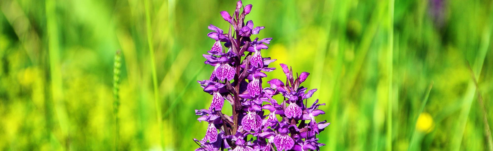 Orchideeëntuin Gerendal