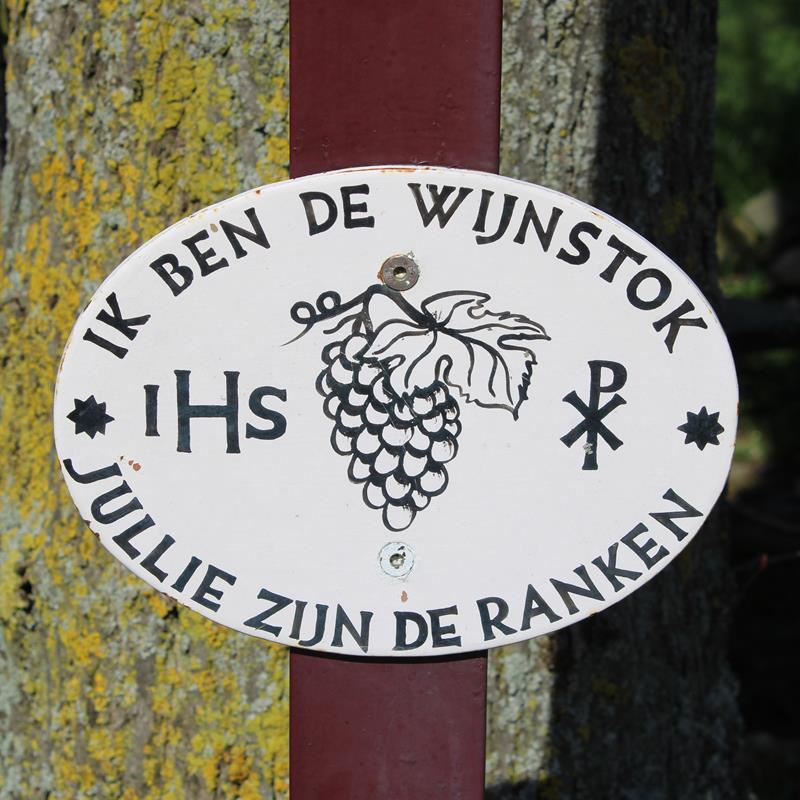 Wijngaard Op gen Heugde - Foto 0