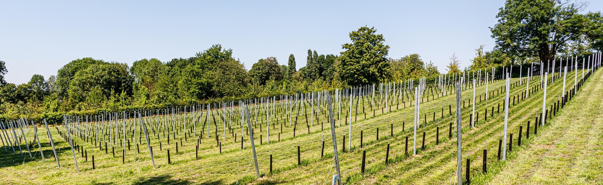 Wijngaard Vroelenderhaag
