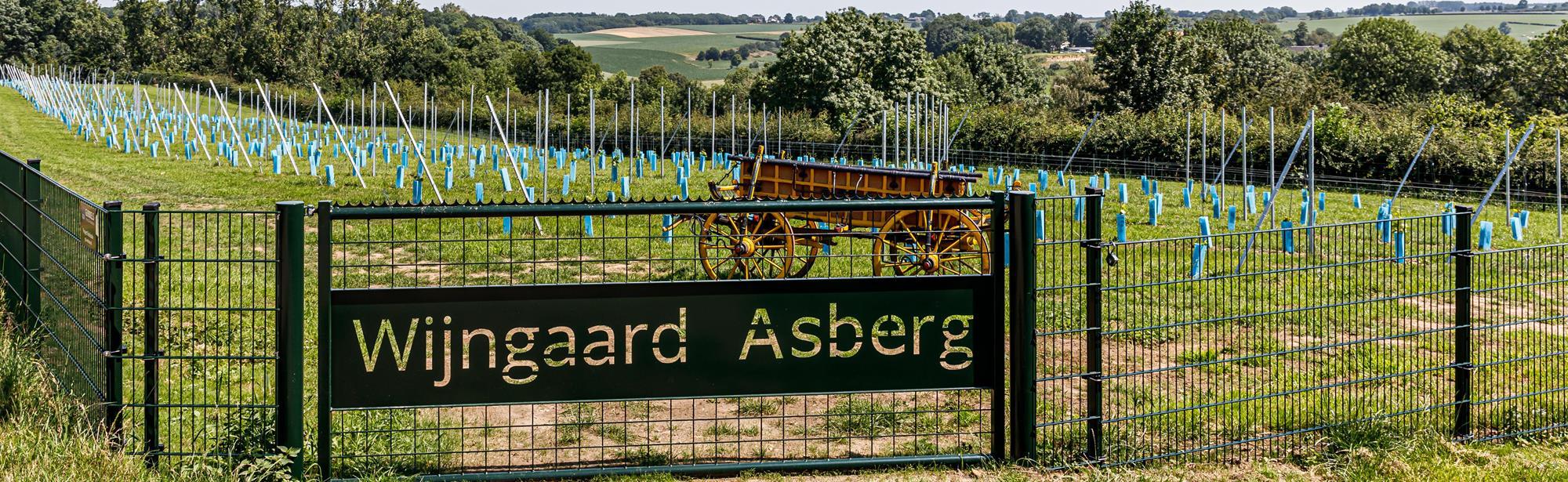 Wijngaard Asberg