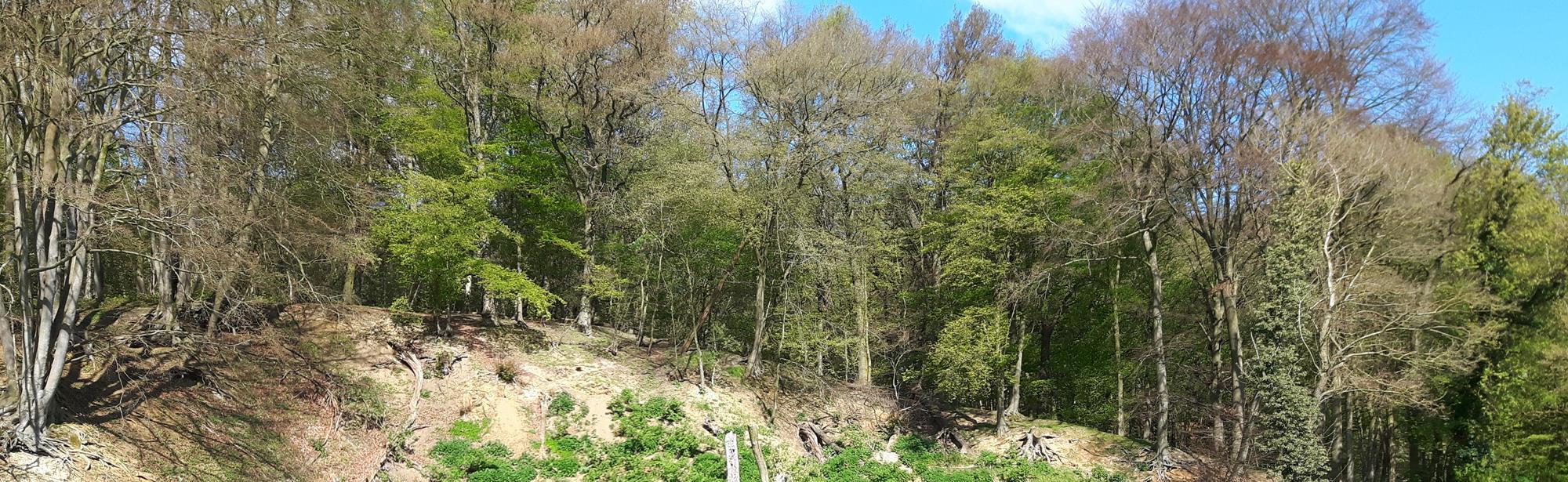 Onderste en bovenste bos