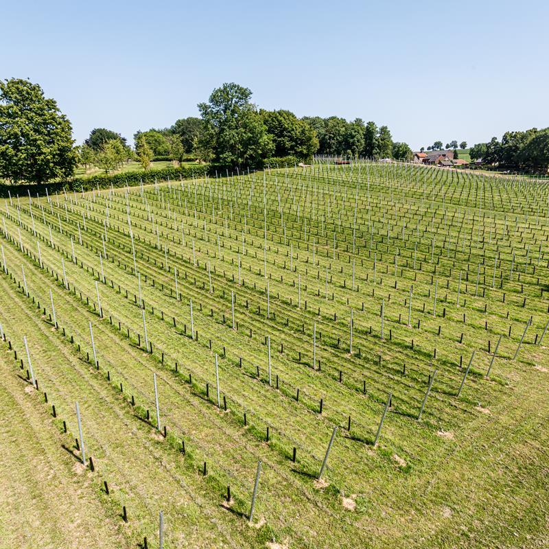 Wijngaard Vroelenderhaag - Foto 1