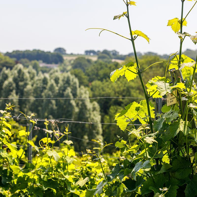 Wijngaard Mheerelindje  - Foto 1