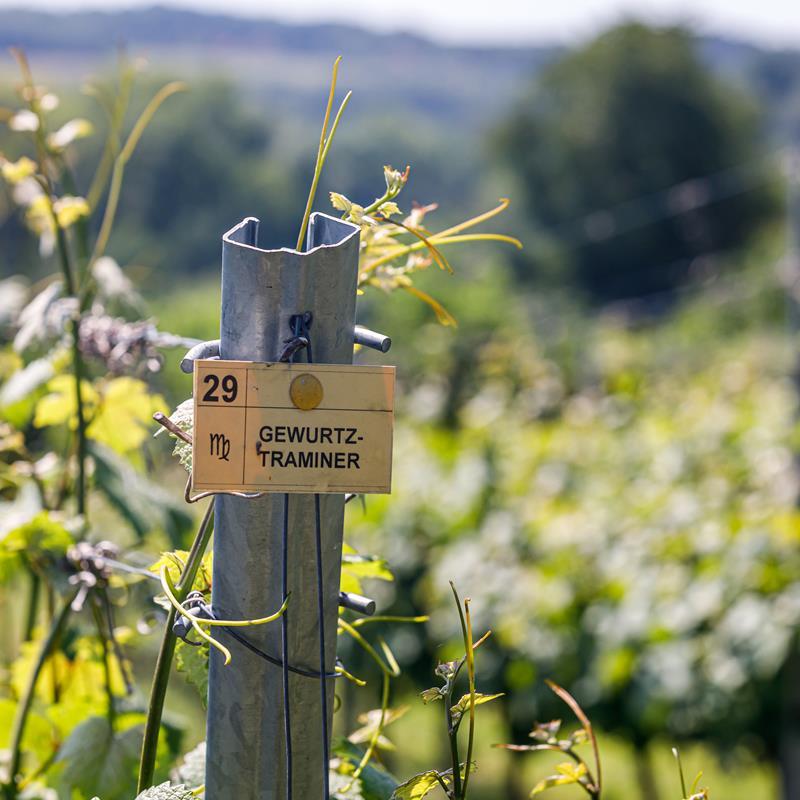 Wijngaard Mheerelindje  - Foto 2