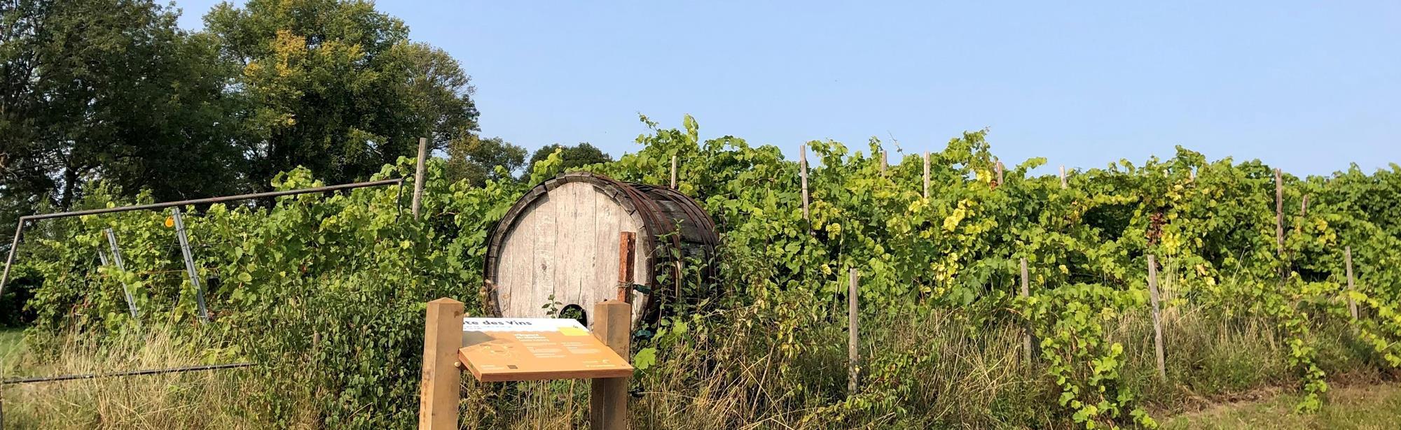 Route des Vins Land van Kalk Winthagen Vi4