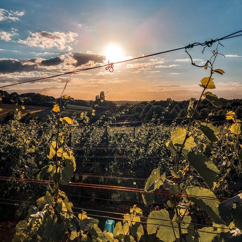 Route des Vins Land van Kalk Winthagen Vi4 - Foto 0