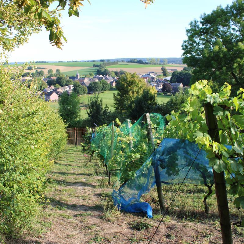 Route des Vins Wahlwiller Eys Vi1 - Foto 3
