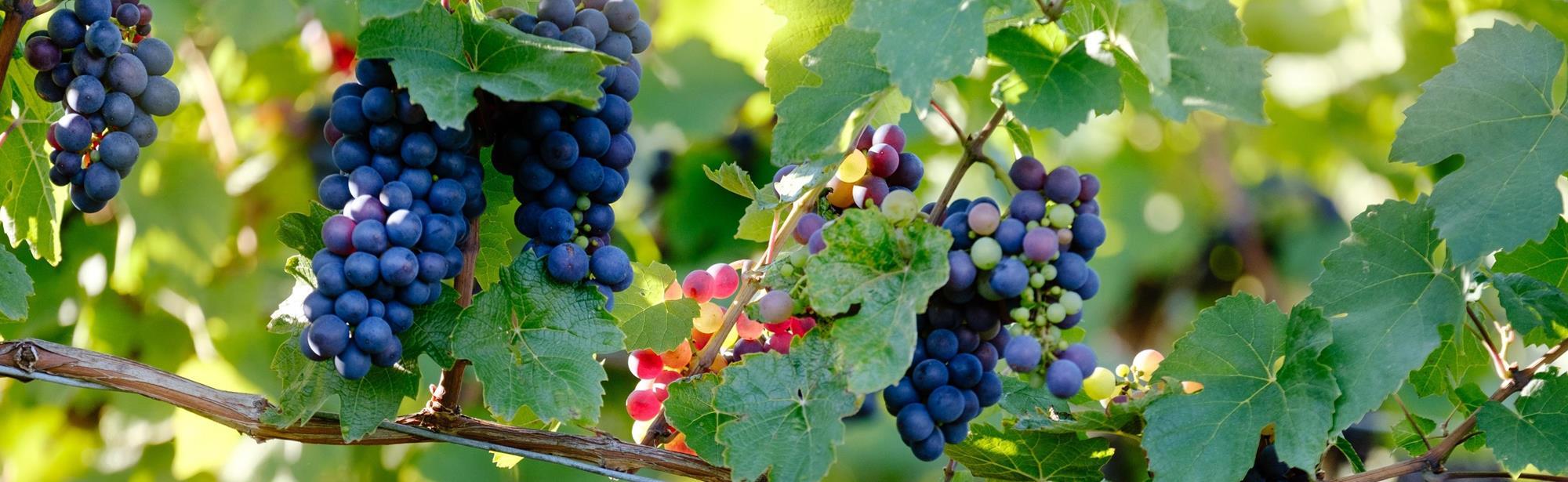 Wijngoed Raar Saint Remi