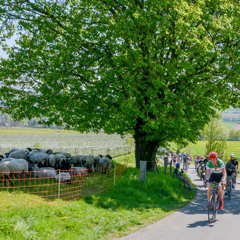 Finale Amstel Gold Race-Lus 3 Zuid-Limburg - Foto 1