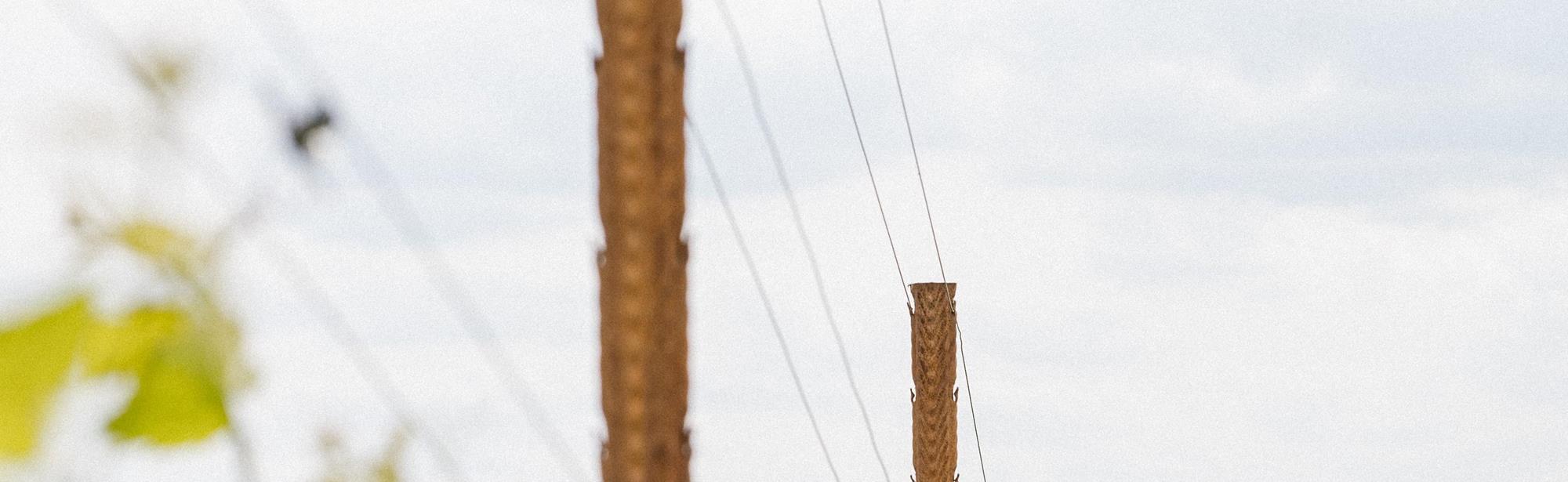 Wijngoed Lenoire