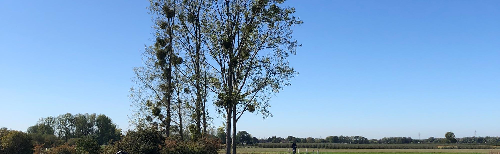 Wielrenroute - Slingerend door het Maasland