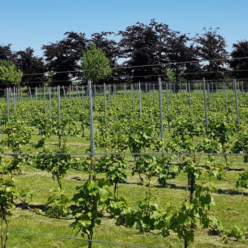 Wijngoed Raar Saint Remi - Foto 1