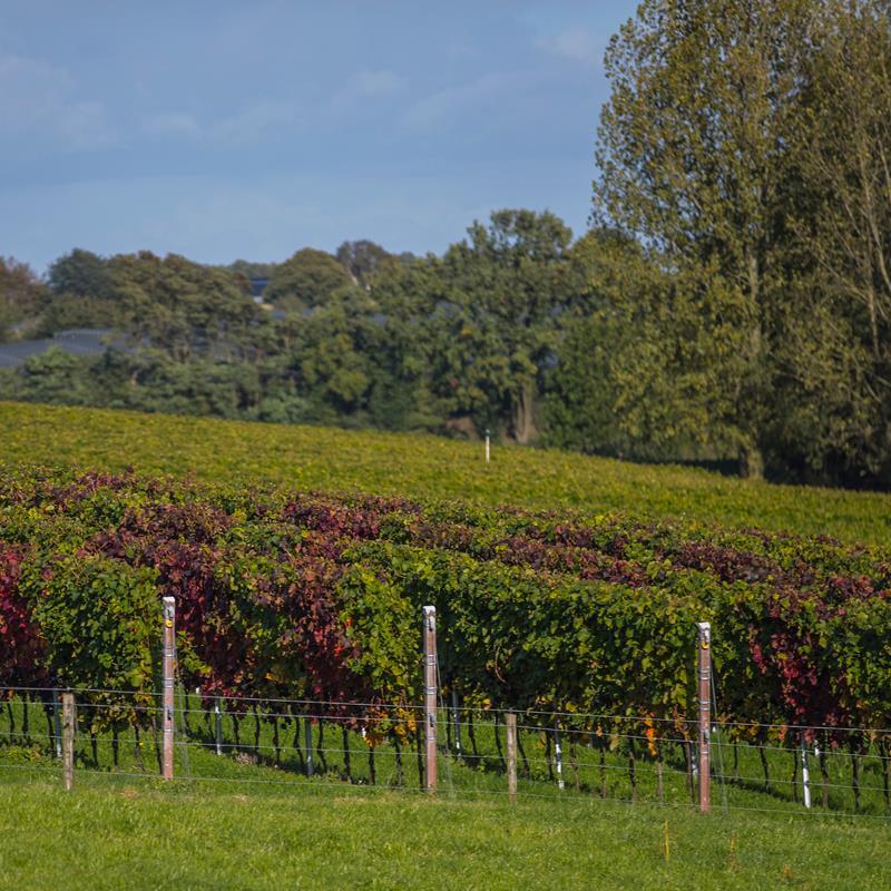 Domein De Wijngaardsberg - Foto 1