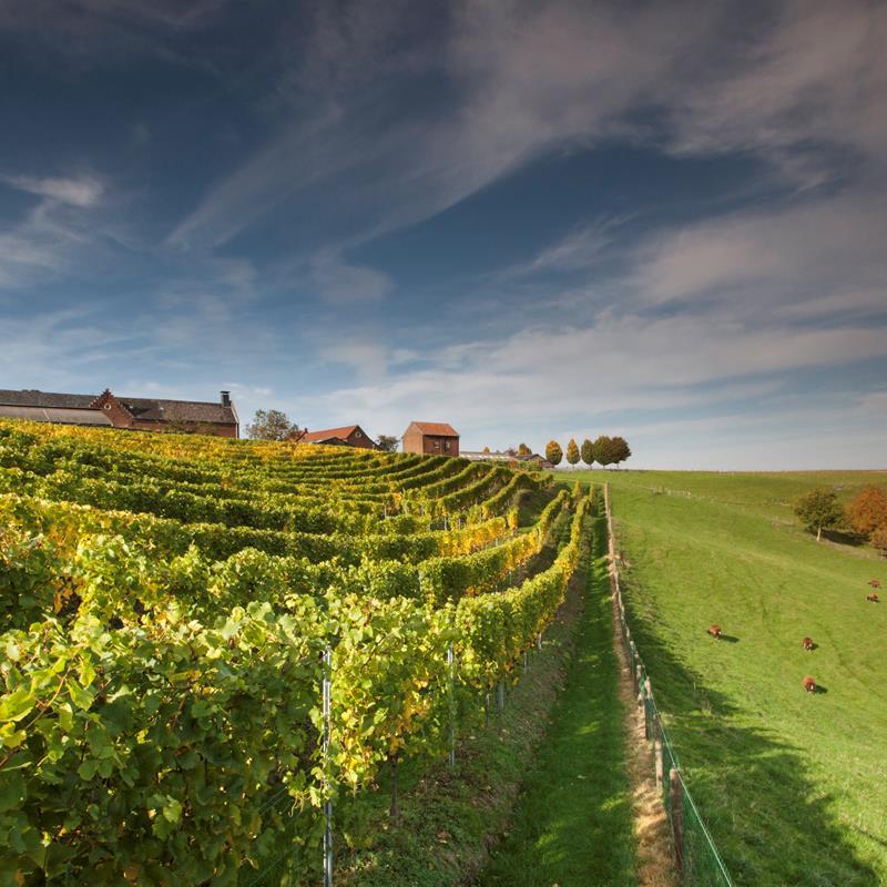 Domein De Wijngaardsberg - Foto 2