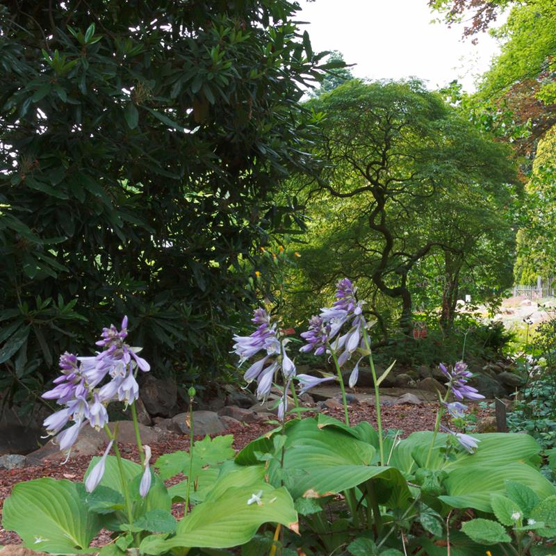 Botanische Tuin Kerkrade - Foto 0