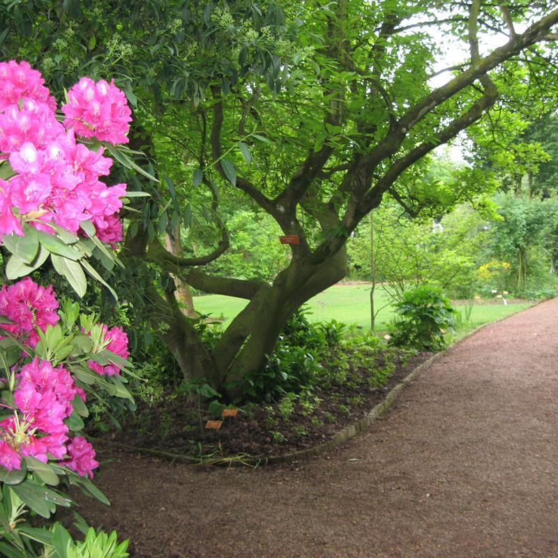 Botanische Tuin Kerkrade - Foto 1