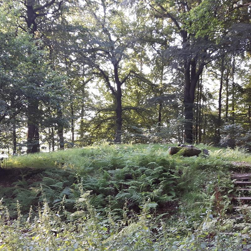 Grafheuvels in het Vijlenerbos - Foto 1