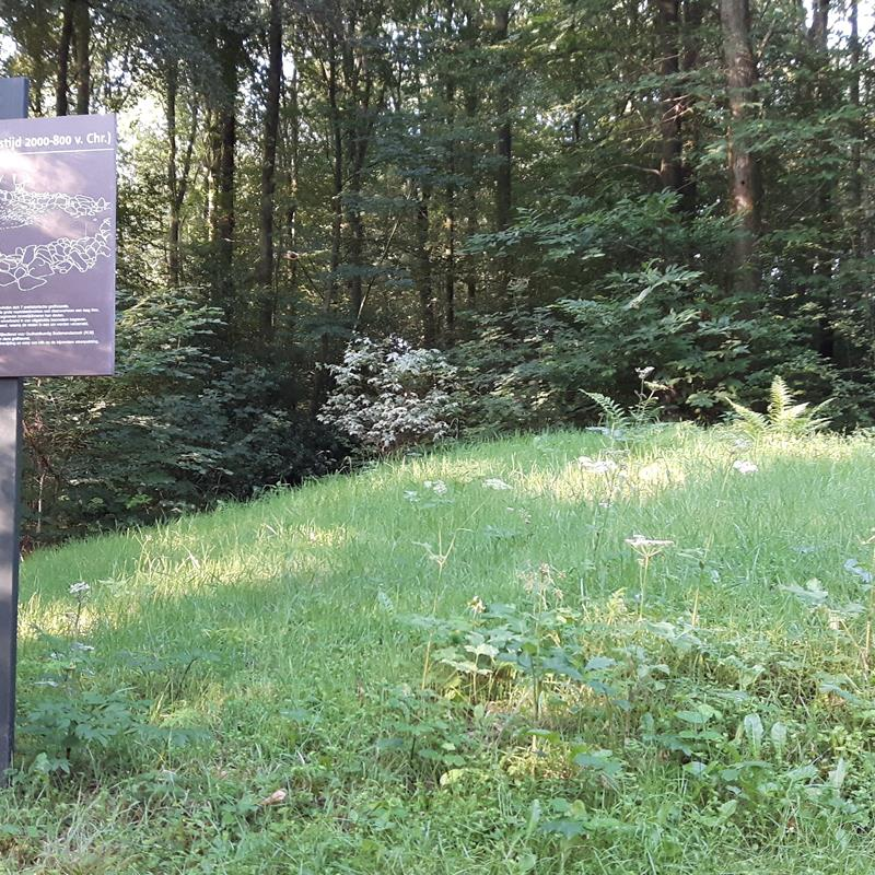 Grafheuvels in het Vijlenerbos - Foto 2