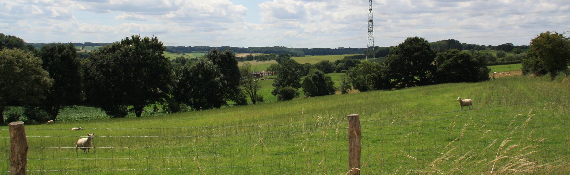 Biologische boerderij-route V1 Voerendaal